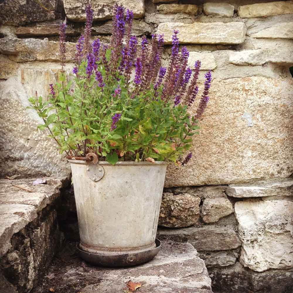 Flower pot on the terrace